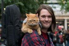 158426 A Street Cat Named Bob - Luke Treadaway UK Movie Wall Print Poster CA