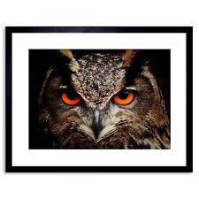 Foto natura Bird GUFO chiudere occhio becco Preda Aquila incorniciato stampa 9x7 pollici