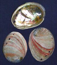 """Natural Red Abalone Half Shells~3""""~Seashell Craft Supply~ (3 Shells)"""