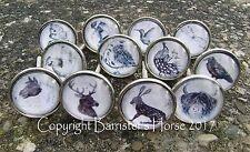 PRETTY ANIMALS & WILDLIFE, CUPBOARD DOOR DRAWER KNOBS HANDLES SILVER METAL/GLASS