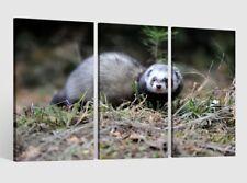 Leinwandbild 3 Tlg Iltis im Wald Tierwelt Tier Leinwand Bilder Holz 9AB1829