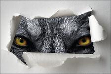 Sticker Trompe l'oeil papier déchiré déco Yeux de loup réf 1317