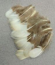 Echte Federn Lady-Amherst Edelfasan,Weißseite, natur,4-8 cm,Basteln,für Hüte!