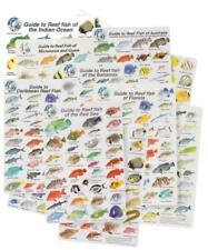 Hinchcliffe Fish ID Slate Fish Sea Life ID Card Waterproof ALL OCEANS