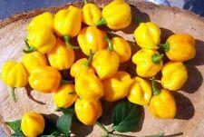 Scotch Bonnet Seeds, Yellow, Heirloom Hot Pepper Seeds, Jamaican Peppers, 25ct