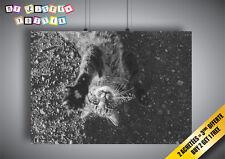 Poster Gatto che guancia con il camera