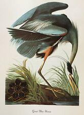 Vtg 1980's Audubon Art Print Full Color Litho WATER MARSH BIRD * SEE VARIETY