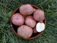 Kerr's Pink Seed Potatoes - Certified Irish Seed (Class S) Maincrop