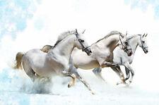 Adesivo animali Cavalli ref 105