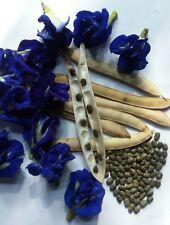 Blue Butterfly Pea 50/100 Seeds Clitoria Ternatea Vine100% new Organic Sri Lanka