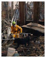 World Trade Center 9/11 Working Rescue Dog Silver Halide Photo - Ver 2