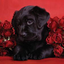 A Valentines Day Blank Card Husband Wife Boyfriend Girlfriend Partner Roses Dogs