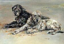 Irish Wolfhound Dog Blank Card/Notelet No 8SH Starprint