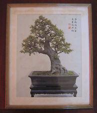 "Quadro/Stampa Bonsai "" ULMUS PARVIFOLIA "" Trained By Mr.Wu Yee-Sun Anni ' 70"