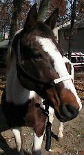 Horse Rope Halter & Lead Rawhide Noseband Horse Hair Tassel Natural Cowboy - New