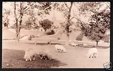 ? Crich near Belper, Ripley, Alfreton & Matlock. Sheep.