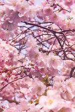 Fensterbild Kirschblüte Frühling Made in Germany Fensterfolie Wiederablösbar