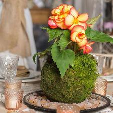 9-18 cm Creative Moss Ball Fleur Pot Pot Planter Bonsaï Plant Titulaire
