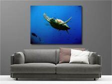 Quadro dipinti decocrazione in kit Tartaruga de Mare ref 15095641