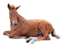 Wandsticker Wandtattoo Wandaufkleber Kinderzimmer Fohlen Fuchs Pferd süß