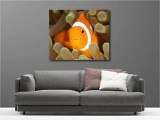 Quadro dipinti decocrazione con kit Pesce Nemo ref 5730250