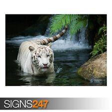 White Tiger BEAU (3583) Animal Poster-Photo Poster print ART * Toutes Les Tailles