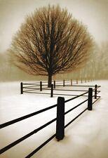 Solitude by David Lorenz Winston Art Print Tree Landscape Photo Poster 24x36
