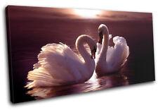 Swans Love Hearts Pink Animals SINGLE TOILE murale ART Photo Print