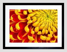 86673 MACRO FLOWER YELLOW DAHLIA PETALS CLOSE UP COOL Decor WALL PRINT POSTER CA