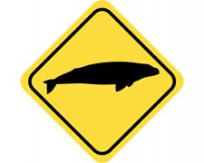 Wal Warnschild Warndreieck Aufkleber Achtung Vorsicht Tier