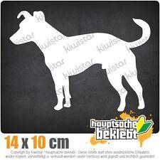 Jack Russell Cane Terrier csf0736 JDM Sticker Adesivo