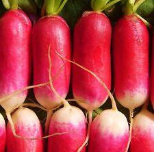 RADISH, ROOT - FRENCH BREAKFAST - 5000 Seeds [..favourite summer salad variety]