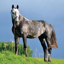 Birthday Cards - Choice of Black, Grey, White, Brown Horse Pony - Fast Freepost!