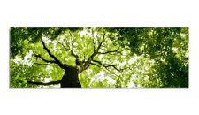 Leinwand Bild BilderWald Natur Baum Blätter Licht Krone Äste Zweige Wandbild XL