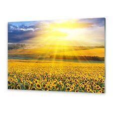 Glasbilder Wandbild Druck auf Glas Sonnenblumenfeld