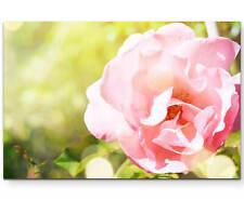 Rosa Rose im Garten - Leinwandbild