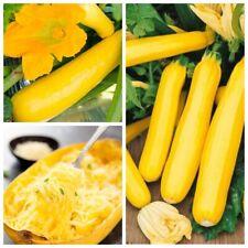 Seeds Squash Zucchini Zolotynka Spaghetti Giant Vegetable Organic Heirloom