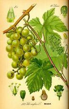 157276 Vintage Fruit Botanical Graphics Wall Print Poster CA