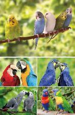 TischSet 3 D Sittich o. Papagei Platzset 2erSet Platzdeckchen Poster Bild Vögel