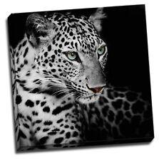 Black Leopard Head Framed Canvas Photo Wall Art Print Square Blue eye