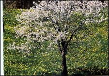 Motiv-AK BÄUME Tree Arbre Baum i.d. Blütenzeit