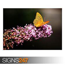 Farfalla nel Giardino Botanico (3362) Animale Poster-Poster Arte Stampa A1 A2 A3 A4