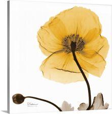 """Iceland Poppy Harvest x-ray photography"" Canvas Art Print"
