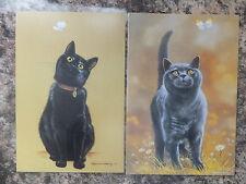 BLACK / GREY BLUE CAT GREETINGS CARD BLANK INSIDE GC 45