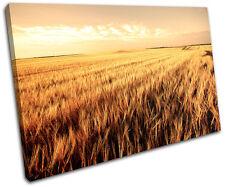 Corn Field Landscapes SINGLE DOEK WALL ART foto afdrukken