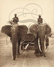 PLAQUE ALU DECO PHOTO ANCIENNE ELEPHANTS CHAINES DRESSEURS GUIDE CHARETTE