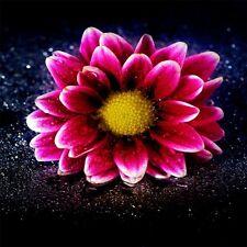 Stickers muraux déco : fleur rose 1292