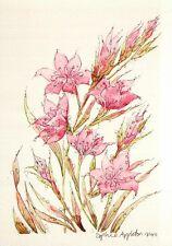 (15154) Postcard - Flowers - Coccinea Sunrise
