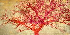Alessio Aprile: Coral Tree Keilrahmen-Bild Leinwand Baum Solitär rot Bäume