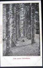 Italy Italia~1900's Viala presso VALLOMBROSA